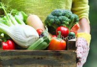 sustainable dieting information