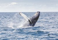 Mexico Humpback Whale Watching Tours